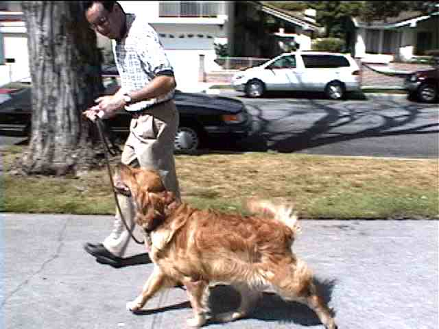 Adam demonstrating loose leash