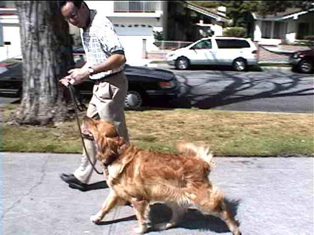 Adam demonstrating loose leash